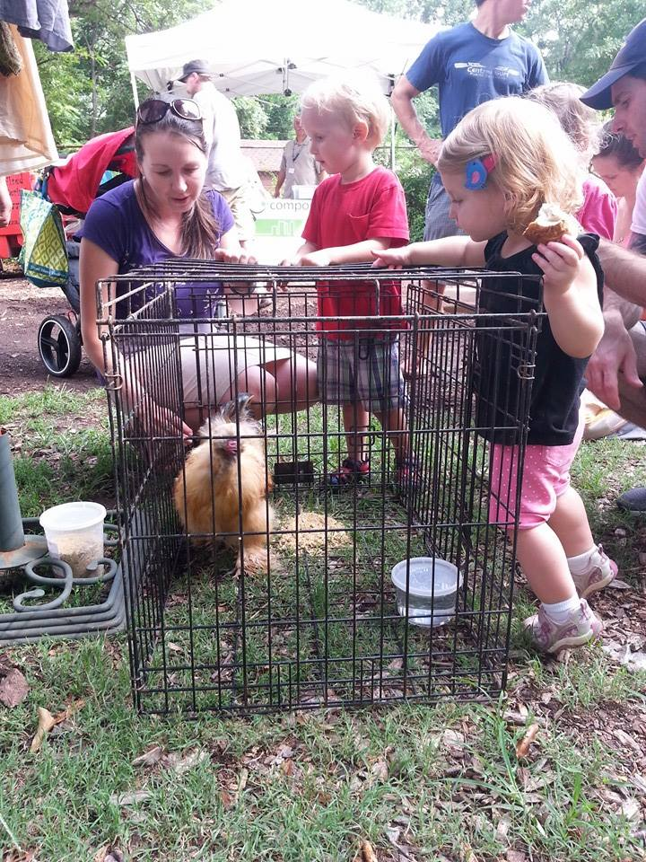 EAV chicken