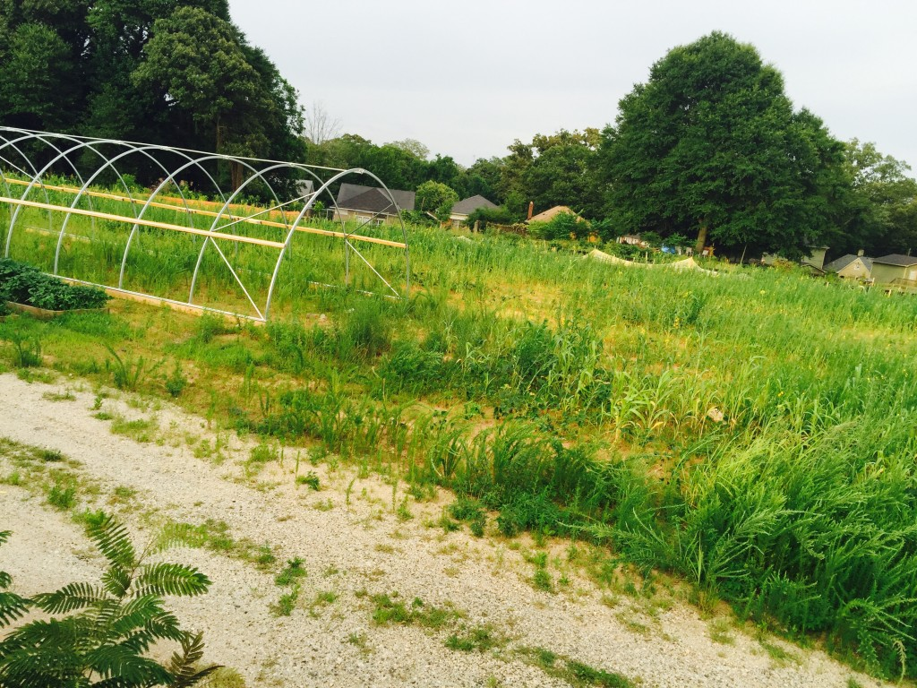 Andy Friedberg's Atlanta Beltline Urban Farm site with cover crops to enrich the soil